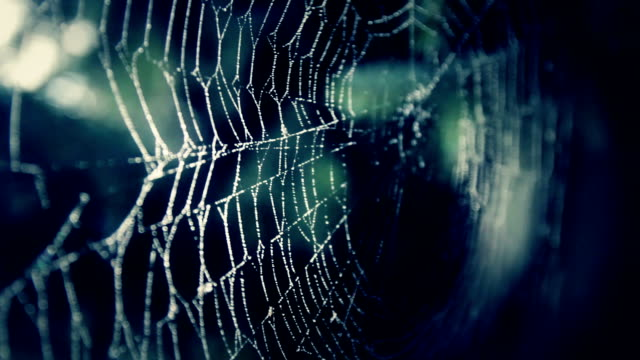 spider web in darkness - concept video - spider web stock videos & royalty-free footage