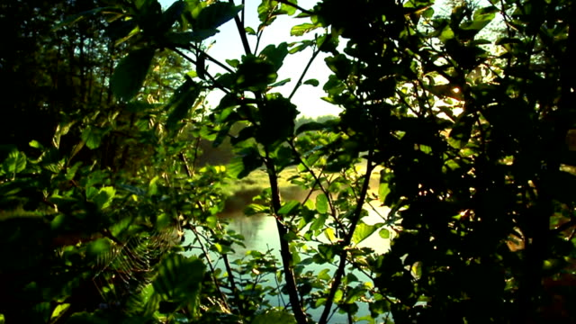 spider web in green bushes - hd 25 fps stock videos & royalty-free footage