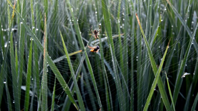 spider web in the field - spider web stock videos & royalty-free footage