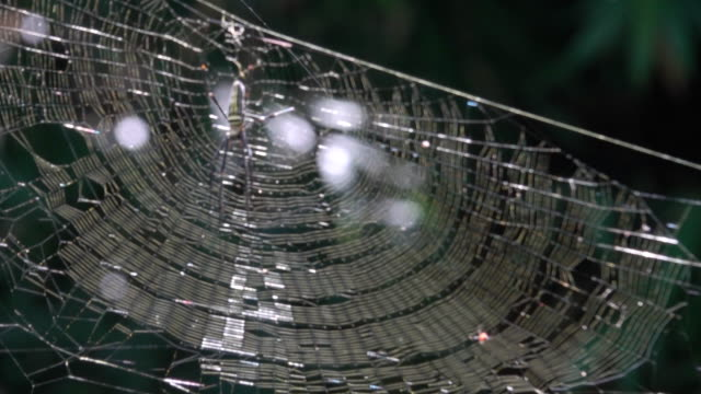spider web in the forest - intricacy stock videos & royalty-free footage