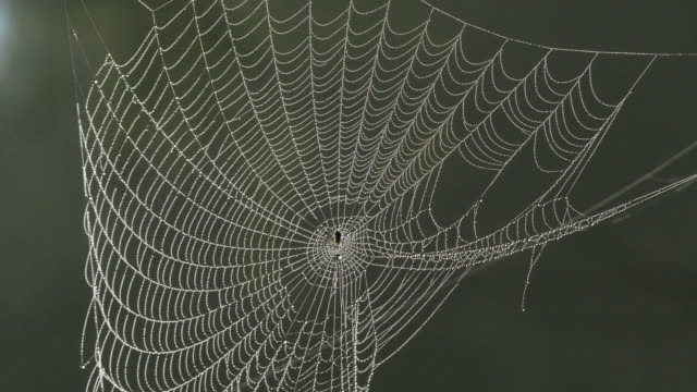 spider web in the forest - imperfection stock videos & royalty-free footage