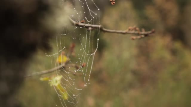 Spider web in the tree