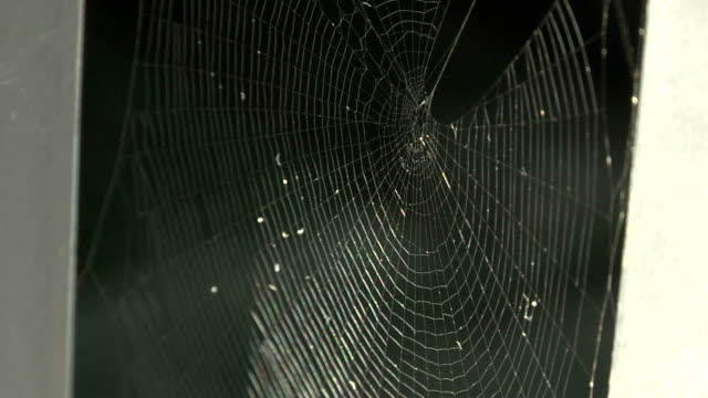 spider web in the wind - arachnophobia stock videos & royalty-free footage