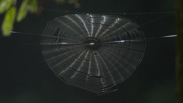 vídeos de stock, filmes e b-roll de spider web, japan. - teia de aranha