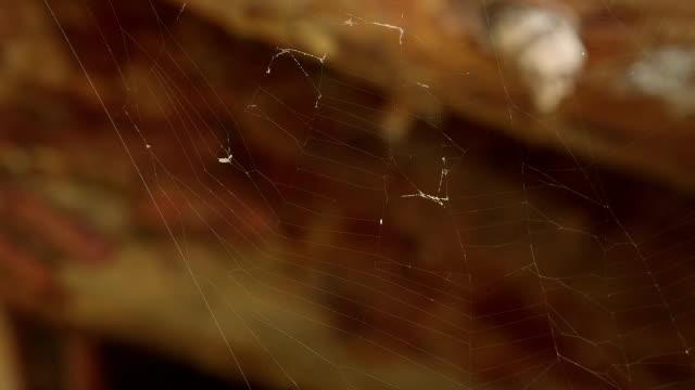 クモの巣-マクロ撮影/ダンス風 - 捕らわれる点の映像素材/bロール