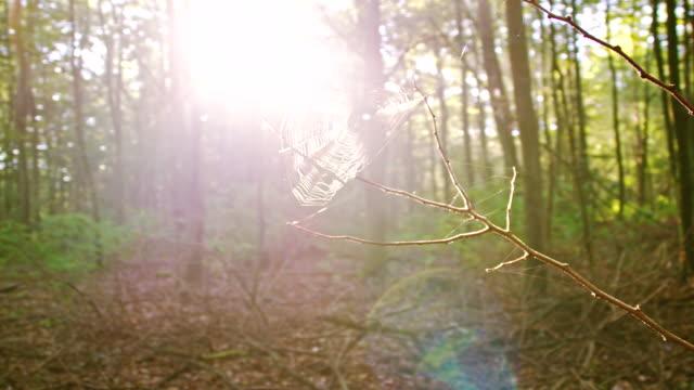 vídeos de stock, filmes e b-roll de ws teia de aranha em um galho - raw footage