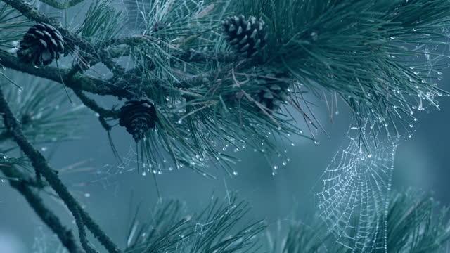 vidéos et rushes de cu spider web on tree - toile d'araignée