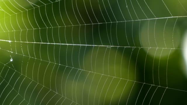 vídeos de stock, filmes e b-roll de spider web, rhineland-palatinate, germany, europe - teia de aranha