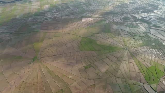 spider web rice field in ruteng, flores island, indonesia. - フロレス点の映像素材/bロール