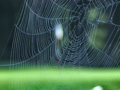 spider web to golf flag focus pull - golf flag stock videos and b-roll footage
