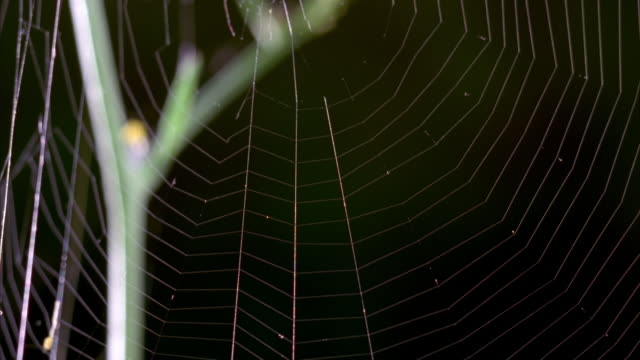 a spider web undulates from a struggling insect. available in hd. - silk stock videos & royalty-free footage