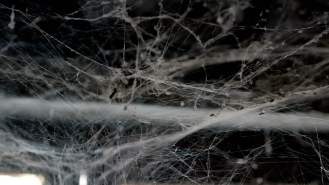 spider web - spider web stock videos & royalty-free footage