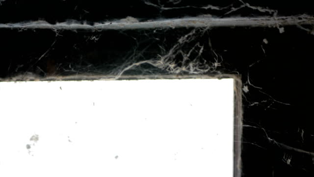 spider web - spooky stock videos & royalty-free footage