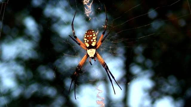 spider web - arachnophobia stock videos and b-roll footage