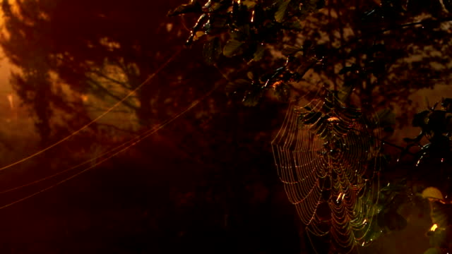 spider web - hd 25 fps stock videos & royalty-free footage