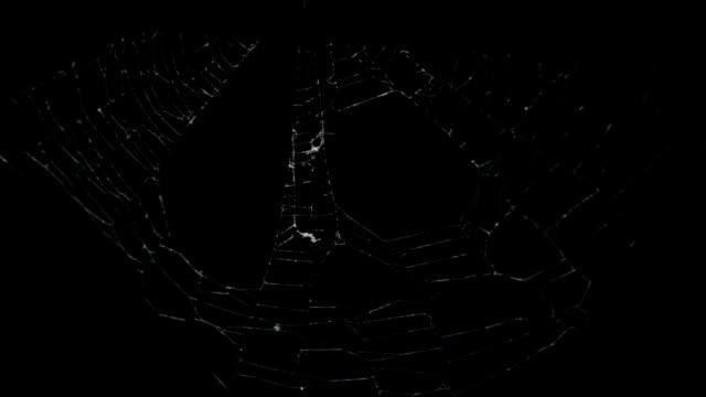 クモの巣 - 捕らわれる点の映像素材/bロール