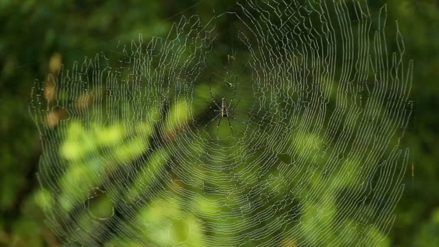 spider web - arachnophobia stock videos & royalty-free footage