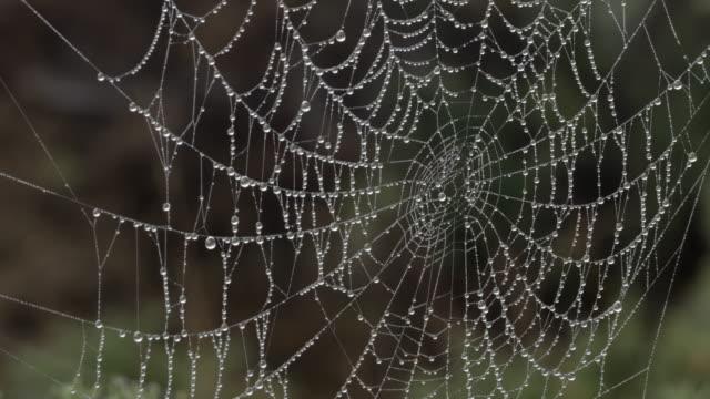 spider web - イーストサセックス点の映像素材/bロール