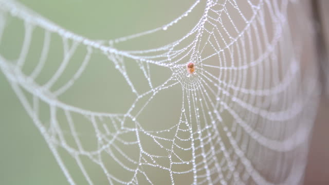 spider web with dew drops - spider web stock videos & royalty-free footage