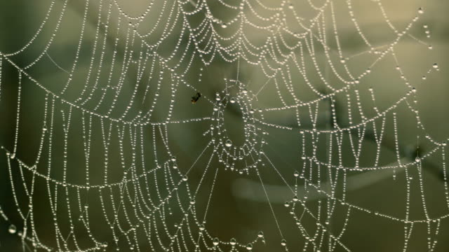 spider web with drops of water - spider web stock videos & royalty-free footage