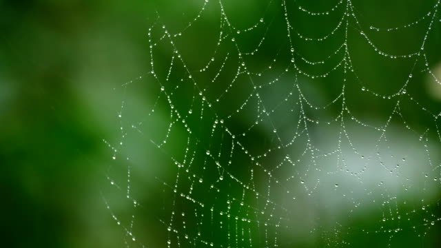 spider web with green background - spider web stock videos & royalty-free footage