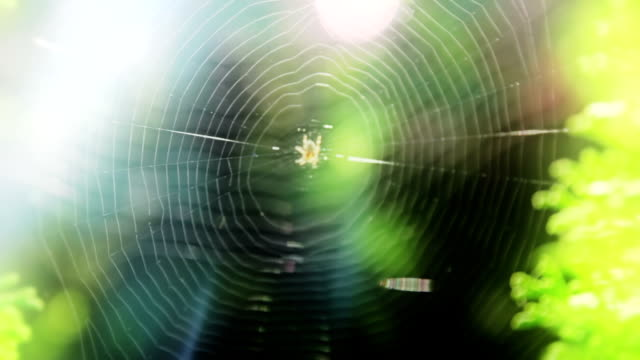 Spider web with lens flare