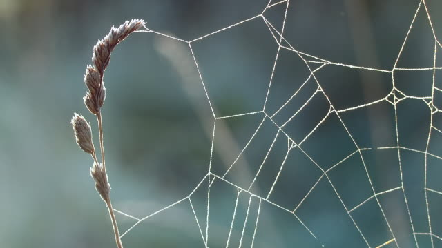 spider web with sparkle and morning dew closeup - spider web stock videos & royalty-free footage