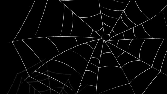 spider webs - spider web stock videos & royalty-free footage