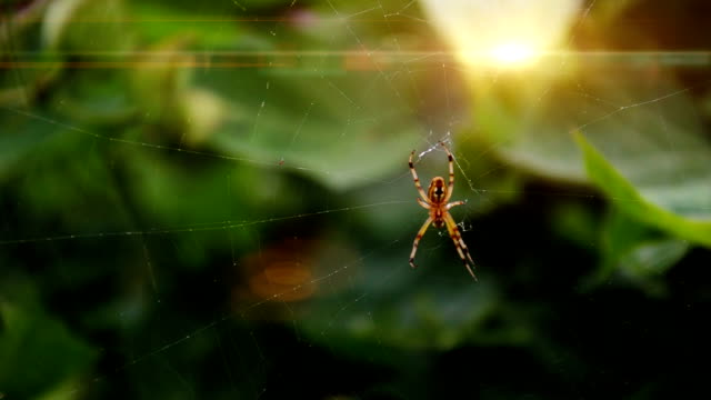 spider working on spider web - spider stock videos & royalty-free footage