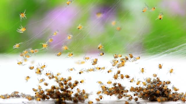 spiders - abundance stock videos & royalty-free footage