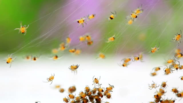 spiders - abundance stock videos & royalty-free footage