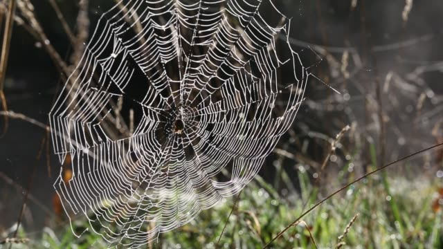spiders web covered in dew. - silk stock videos & royalty-free footage