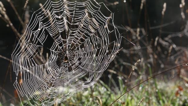 vídeos de stock, filmes e b-roll de a spiders web covered in dew. - teia de aranha