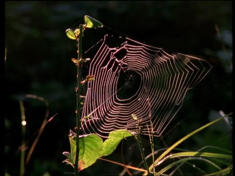 mcu spiders web - sunlit in morning - animal colour stock videos & royalty-free footage