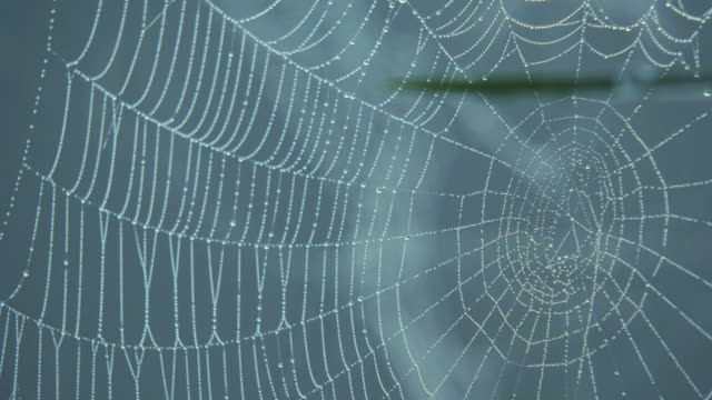 CU R/F Spiders web with dew / Godalming, Surrey, UK