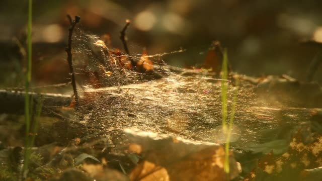 spiderweb glistens with morning dew - spider web stock videos & royalty-free footage