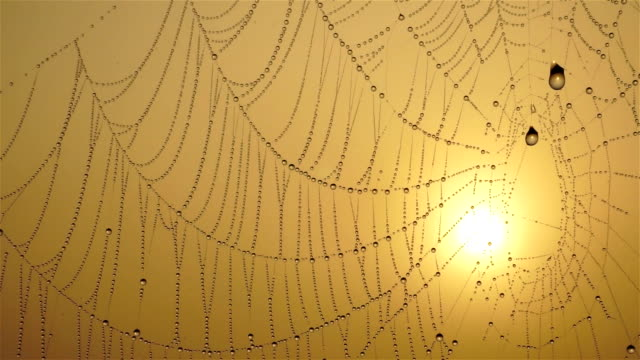 spiderweb - spider web stock videos & royalty-free footage