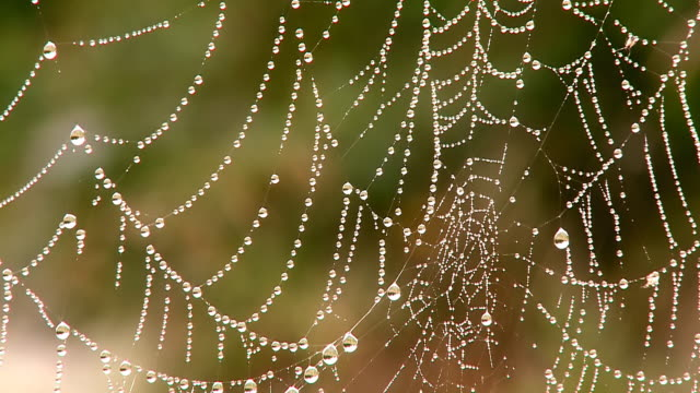CU ZO Spiderweb with dewdrops / Orscholz, Saarland, Germany
