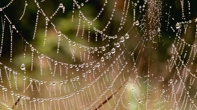 CU Spiderweb with dewdrops / Orscholz, Saarland, Germany