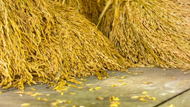 stockvideo's en b-roll-footage met spike rice on wooden background - gepunt