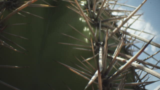 spiky spines of a barrel cactus - barrel cactus stock videos and b-roll footage