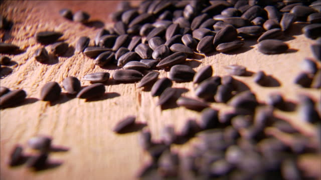 spilled seeds lie on a rough wooden table. - seed stock videos & royalty-free footage