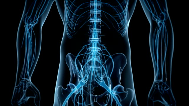 spinal nerves - anatomie stock-videos und b-roll-filmmaterial