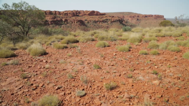 spinifex grass on stony ground, outback australia - northern territory australia stock videos & royalty-free footage