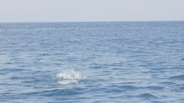 3 Spinner dolphins do 3 spins in sequence