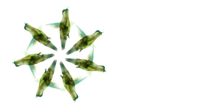 vídeos de stock e filmes b-roll de spinnig humming aves - beija flor