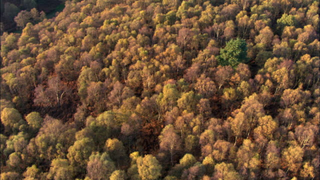 spinning aerial over autumnal woodland, uk - autumn stock videos & royalty-free footage