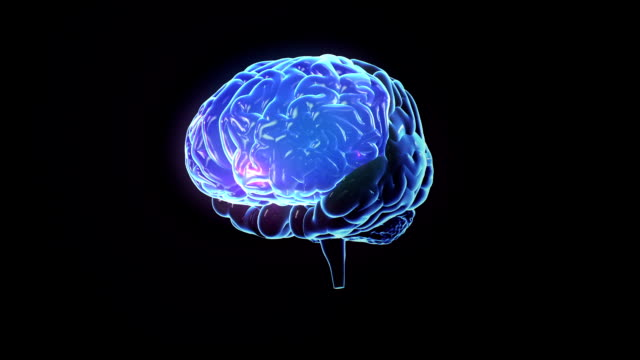 spinning human brain with zones lighting up. loopable. - reminder stock videos and b-roll footage