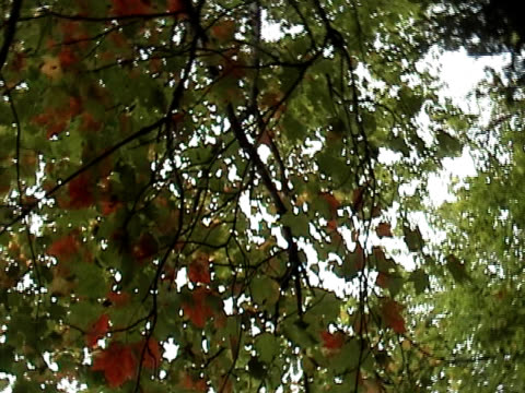 spinning leaves - named wilderness area stock videos & royalty-free footage