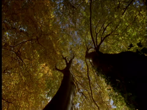 spinning pan under large beech trees in autumn - season stock videos & royalty-free footage